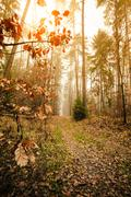 Stock Photo of Pathway through the misty autumn forest