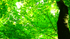 Trees in forest with bright afternoon sun and wind  and rays and sound, rotation Stock Footage
