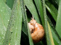 Snails (Helix pomatia) rain Stock Photos