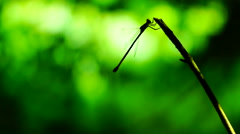 Silhouette of dragonfly resting on a branch flying and sitting down again - stock footage