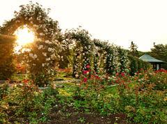formal rose garden - stock photo