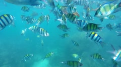 Colourful fish Stock Footage