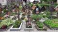 4k Beautiful cemetery graves at Hallstatt catholic church 4k or 4k+ Resolution