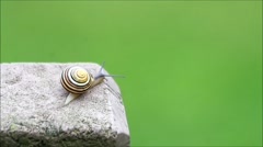 Snail crawling slowly over concrete, green background, Copy space Stock Footage