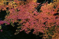 Fall season in japan at Rurikoin Stock Photos