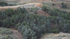 Juniper Trees in a Valley in Early Morning Stock Footage