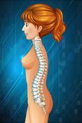 Spine diagram in detail - stock illustration