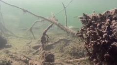 Underwater alive with shoals of fish Stock Footage