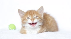 Funny red kitten meowing, close-up Stock Footage