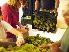 Workers sorting grapes on conveyer belt at winery - stock photo