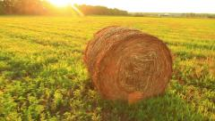 Straw in the field Stock Footage