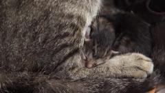 Newly born cat Stock Footage