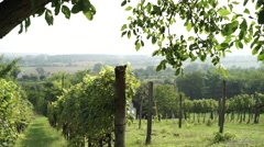 Pan clip of wine growing farm Stock Footage