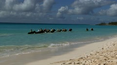 Stock Video Footage of Horses in the tropical carribean sea