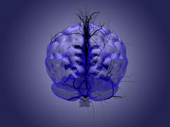 Brain root concept of a root growing in the shape of a human brain. Stock Illustration