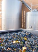 cabernet sauvignon vinemaking with grapes and tanks - stock photo