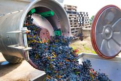 corkscrew crusher destemmer winemaking with grapes - stock photo