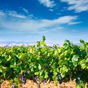 Stock Photo of Requena in Valencia province a wine region of Spain
