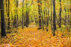 deciduous autumn forest - stock photo