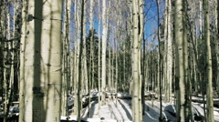 Aspen forest Stock Footage