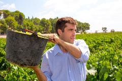 chardonnay harvesting with harvester farmer winemaker - stock photo