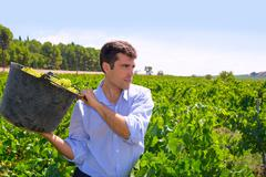 Chardonnay harvesting with harvester farmer winemaker Stock Photos