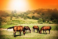 Wild horses on green field and sunny sky - stock photo