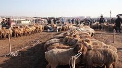 Sheep at Kashgar Livestock Market, China Stock Footage