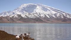 Ducks, Karakul Lake, Xinjiang countryside Stock Footage