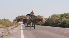 Chinese farmer, donkey & cart, Xinjiang - stock footage