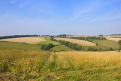 yorkshire wolds wildflowers - stock photo