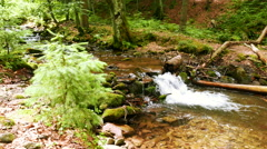 Mountain  stream, river  in wood, sunny  summer day. Landscape in  4K 3840x216 Stock Footage