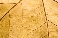 Macro on textured autumn brown leaf Stock Photos