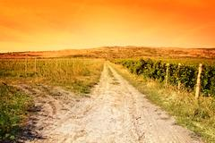 Agriculture landscape - vineyard and sunny colorful sky - stock photo