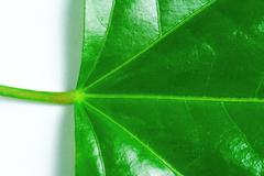 Detail on green leaf Stock Photos