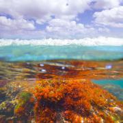 Mediterranean underwater seaweed algae in Denia Javea Stock Photos