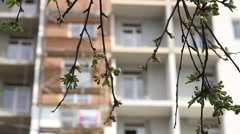 Construction. Building through leaves focus pull. Stock Footage