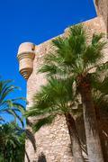 Stock Photo of Elche Elx Alicante el Palmeral Palm trees Park and Altamira Pala