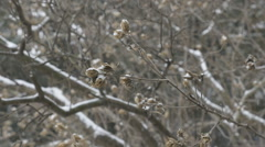 Slow motion snow falling. Winter buds. - stock footage