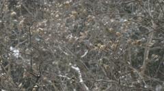 Slow motion snow falling. Winter bud. - stock footage