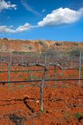 Winter leafless vineyard field in Utiel Requena Spain - stock photo