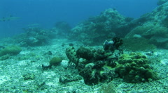 Scuba Diving Underwater off the South Pacific Island of PALAU Stock Footage