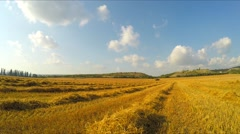 Stripes Of Stubble Hay Lying On Yellow Field Stock Footage