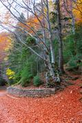 Autumn forest in Pyrenees Valle de Ordesa Huesca Spain - stock photo