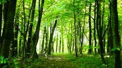 Trees in forest with bright afternoon sun and rays and sound, pan Stock Footage