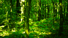Trees in forest with bright afternoon sun , pan - stock footage