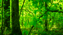 Trees in forest with bright afternoon sun and rays and sound, pan - stock footage