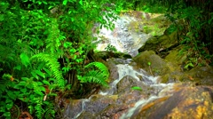 Stock Video Footage of Beautiful Waterfall in the Jungle with Sound