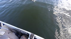 Northern Pike puts up a splashing fight Stock Footage