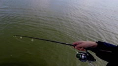41 inch Northern Pike being netted and brought in the boat cropped Stock Footage